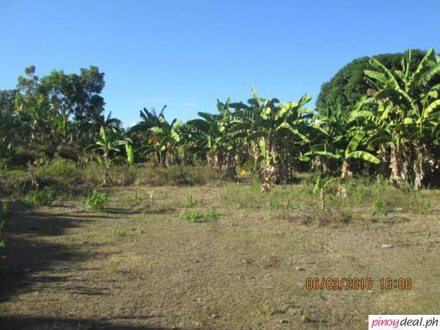 Lot for Sale in Batinguel, Dumaguete City, 5600 sqm., Clean Title