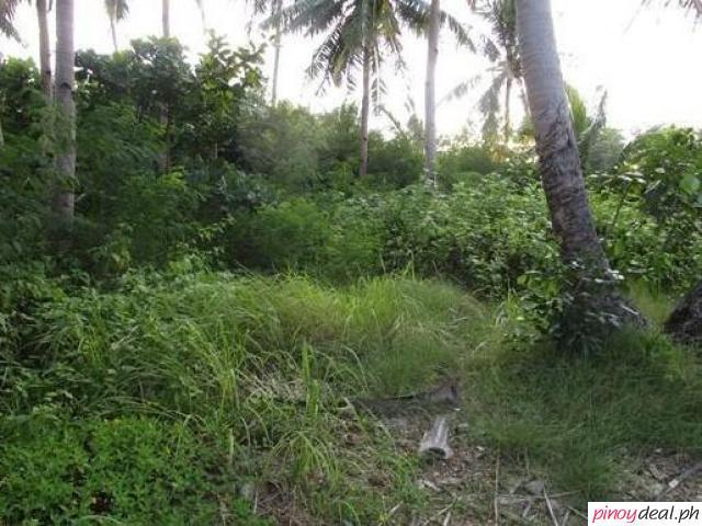 Agricultural And Commercial Lots For Sale in Pagsanjan Laguna