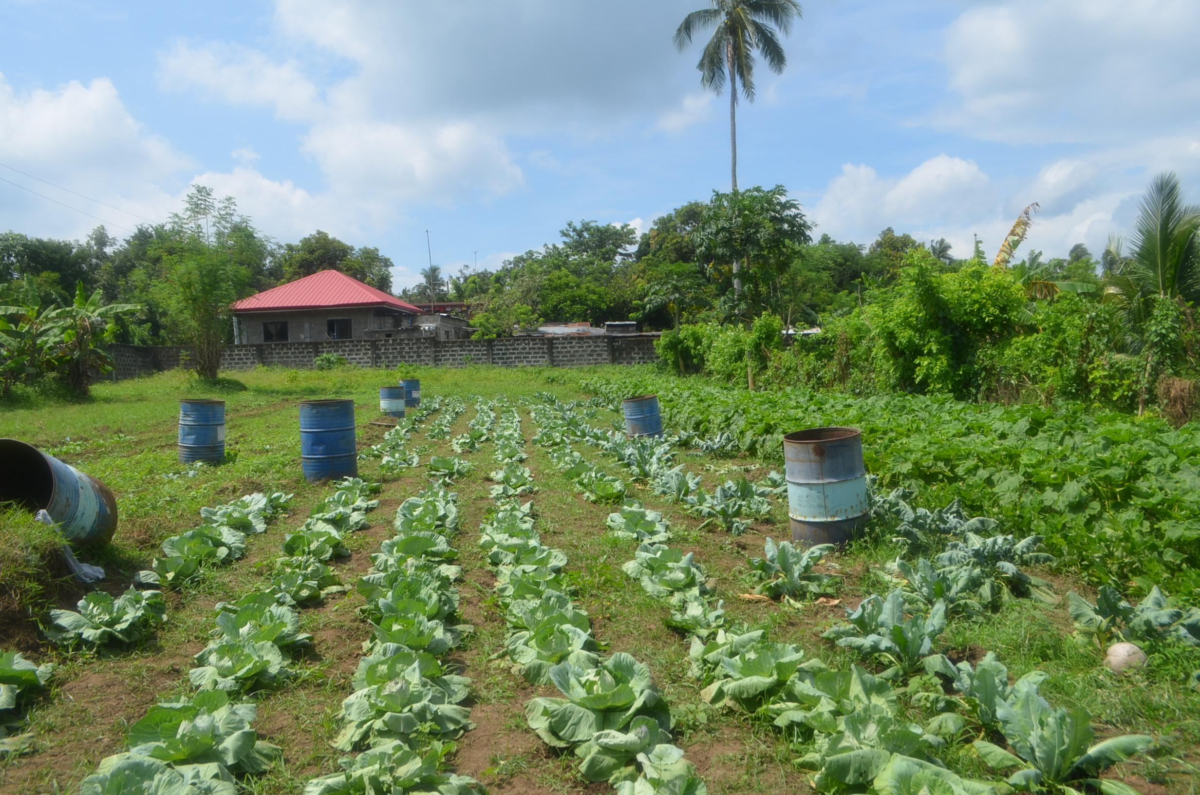 Farm/Commercial lot for sale in Lipa Batangas Contact us now +639261514540